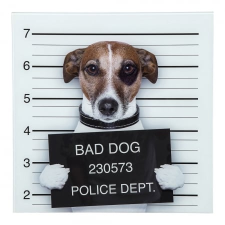 Picture Glass Bad Dog 40x40cm