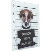 Картина Glass Bad Dog 40x40cm