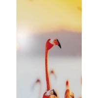 Картина на стекле Flamingo Family 80x80cm