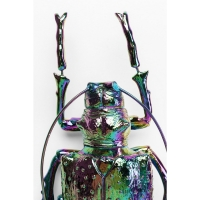 Настенный декор Longicorn Beetle Rainbow