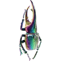 Настенный декор Herkules Beetle Rainbow