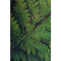 Пуф Cherry Leaf Brass Ø35cm (Ожидаемый товар)